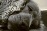 non svegliare il can che dorme  let sleeping dogs lie e1359931831443 僕はランニング中毒症!?毎日走ることがやめられない3つの理由