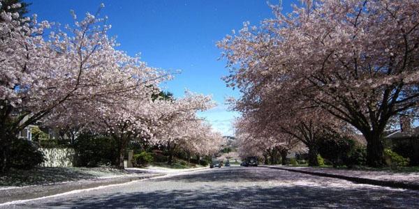 sakura 海外で自分のお店をもってみたい女性は必見!バンクーバーで起業した日本人女性にインタビュー!